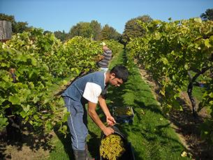 Vineyards & Project Management